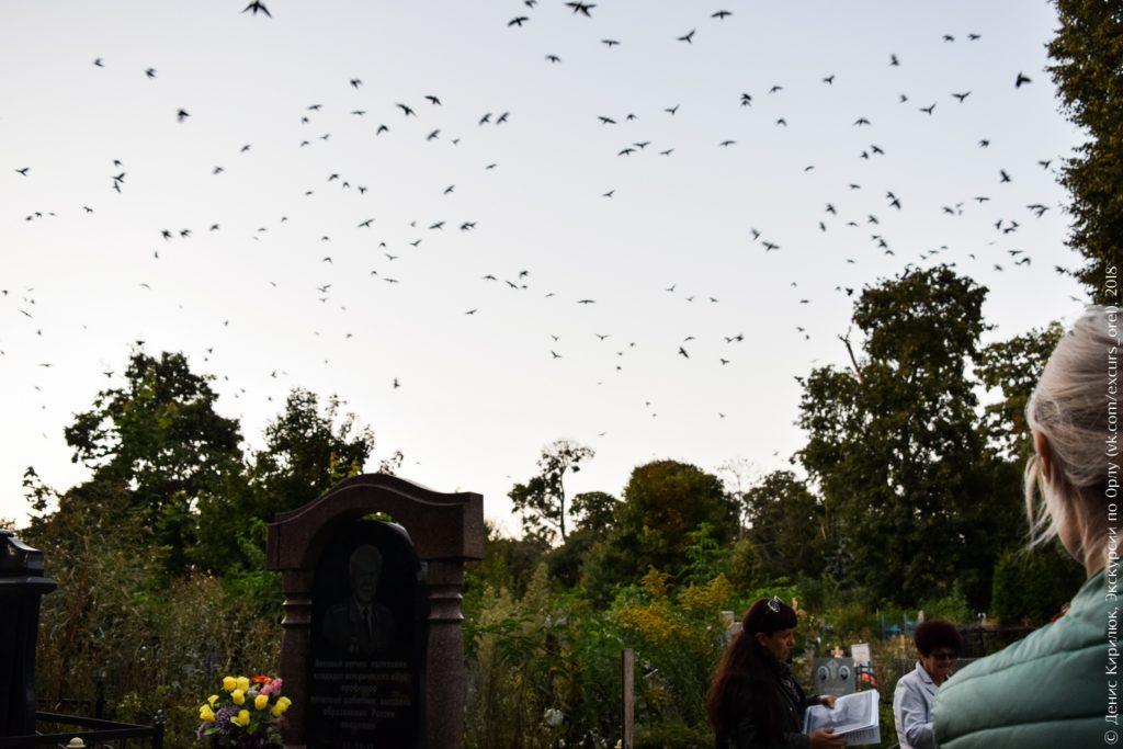 Птицы над кладбищем, сумерки
