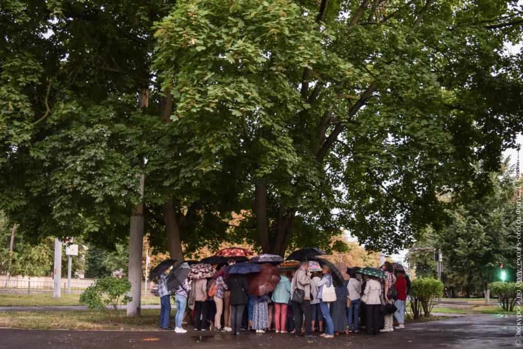 Люди под зонтами под высокими деревом с широкой кроной.