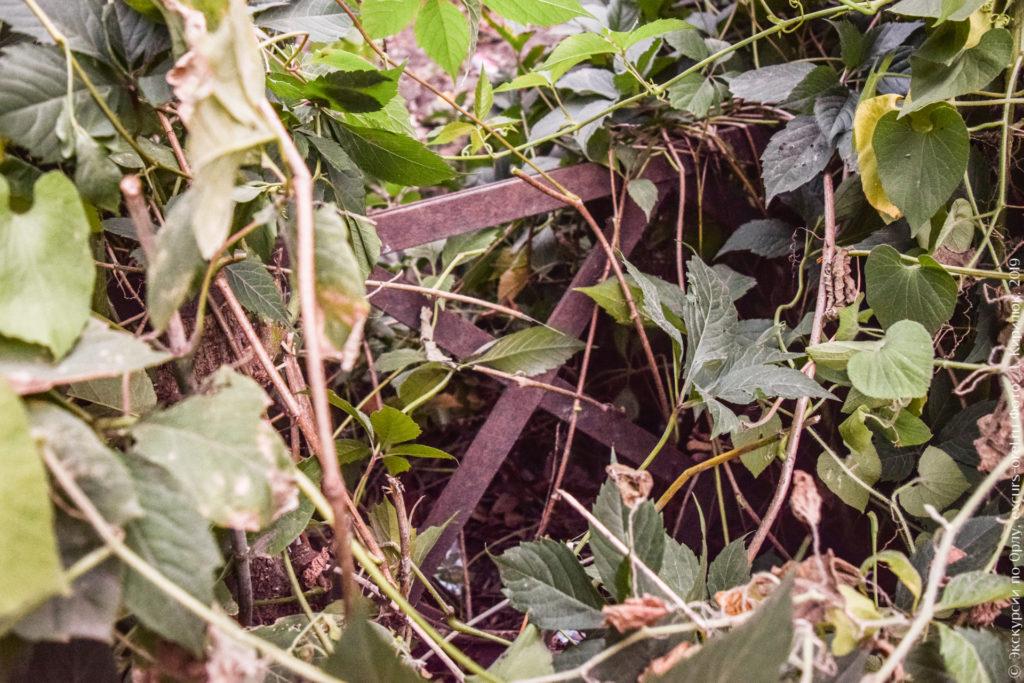 Часть металлической ограды в густых зарослях.