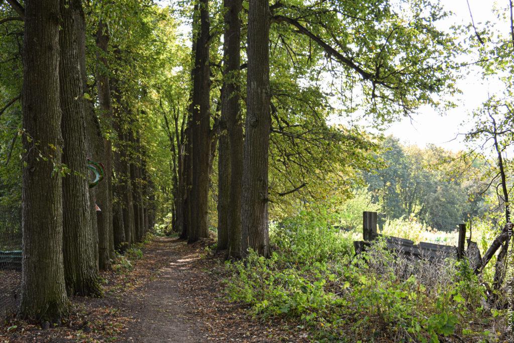 Липовая аллея ранней осенью.