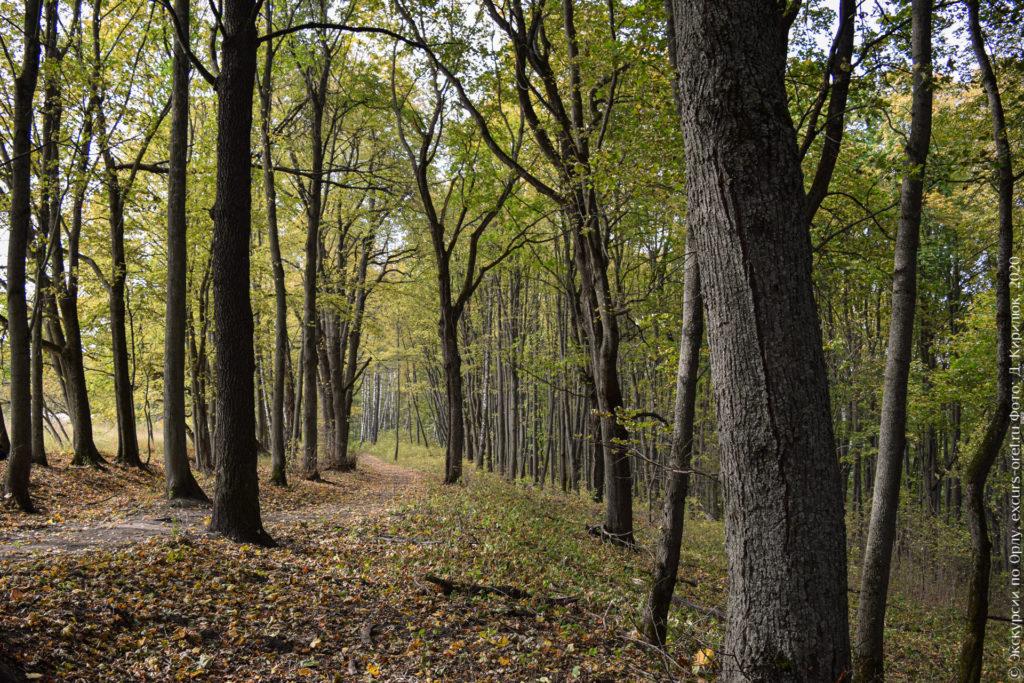 Лесопосадка с тропой, ранняя осень.