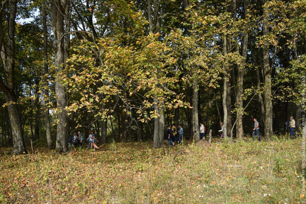 Лесопосадка с тропой, ранняя осень. По тропе идут люди.