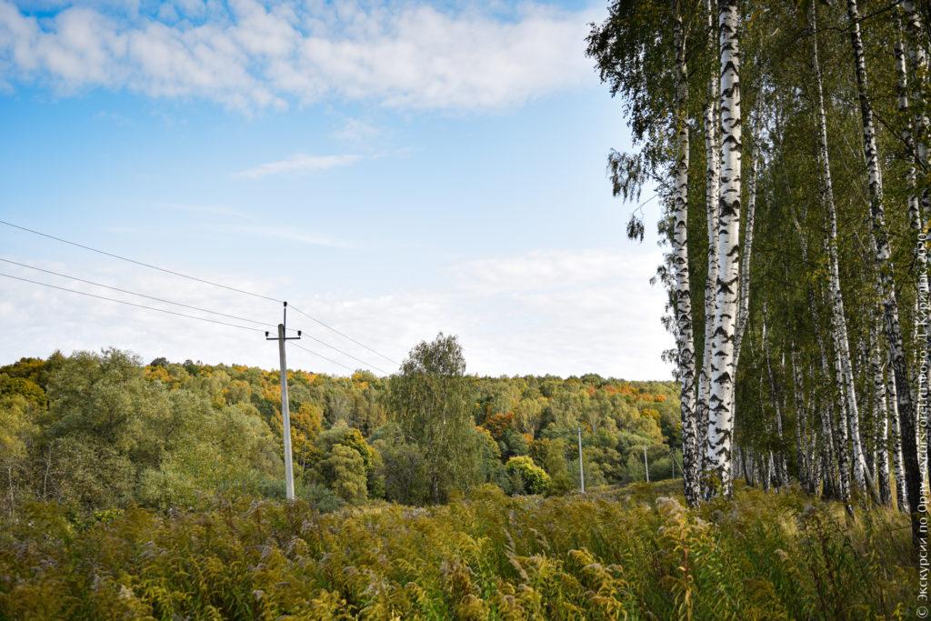 Берёзовые посадки на фоне осеннего леса.